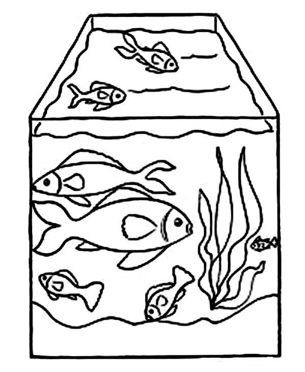 Drawing Fish Tank Coloring Page - NetArt