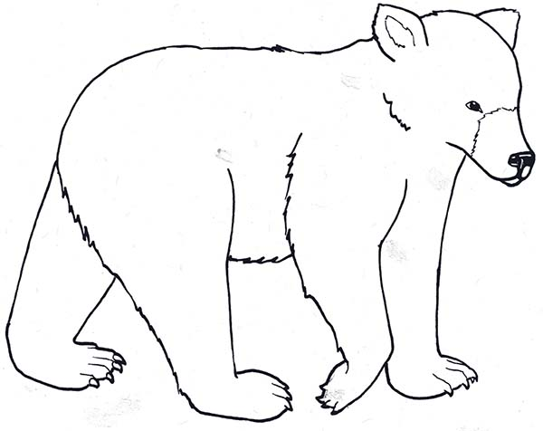 Drizzly Bear Hunt for Food Coloring Page