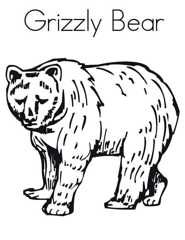 Enormous Grizzly Bear Coloring Page