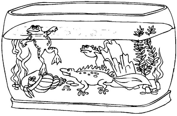 Fish Tank Fill Wierd Animals Coloring Page