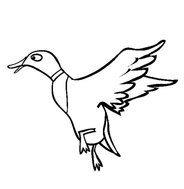 Flying Duck Coloring Page