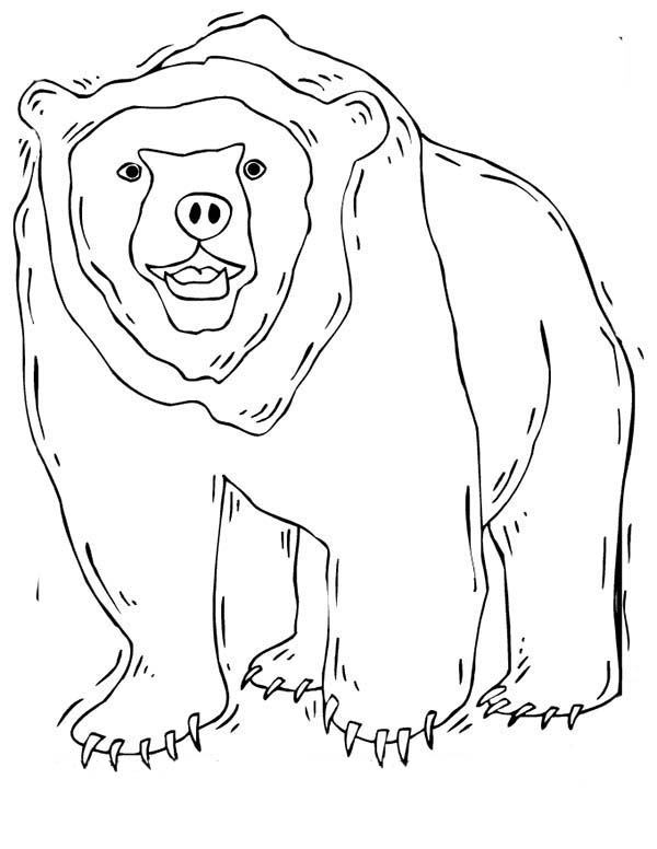 Grizzly Bear is Shaking Coloring Page