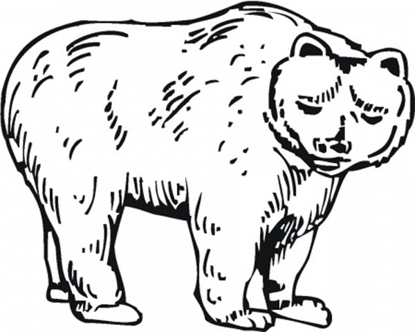 Hairy Brown Bear Coloring Page