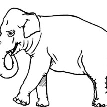 How to Draw an Elephant Coloring Page