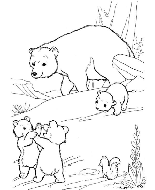 Little Bear Fight Among Themselves Coloring Page