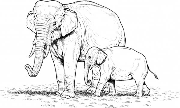 Mother Elephant and Her Baby on the Meadow Coloring Page