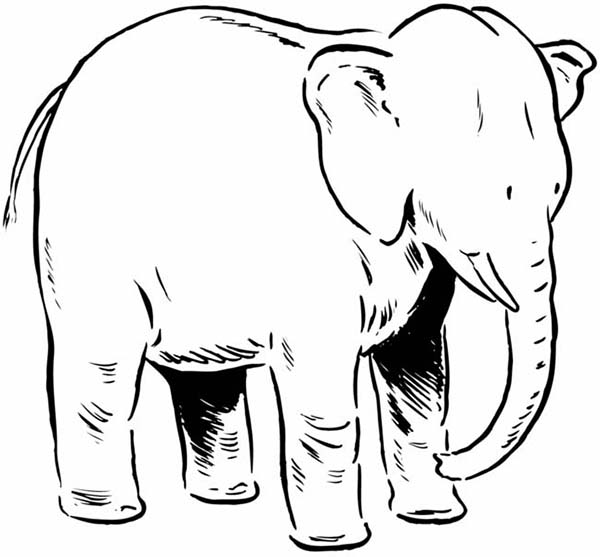 Mother of Elephant Coloring Page