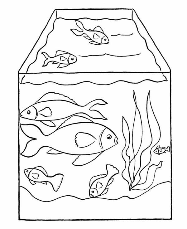 pet fish in fish tank coloring page netart