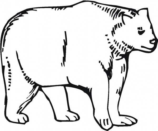 Picture of Bear Coloring Page