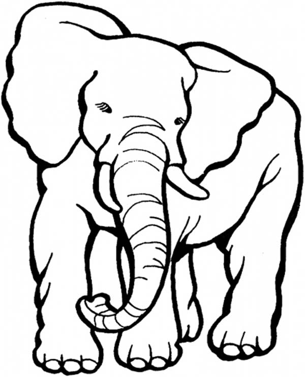 Picture of  an Old Elephant Coloring Page