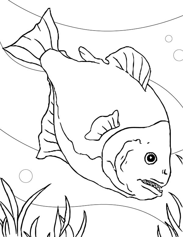 Special Fish Tank for Piranha Coloring Page