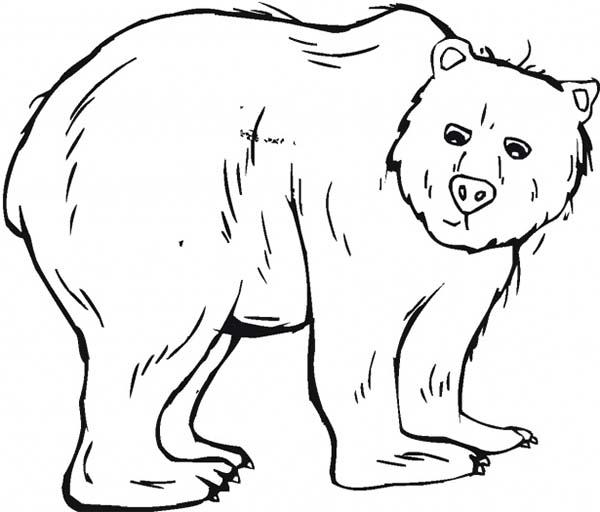 Trembling Black Bear Coloring Page