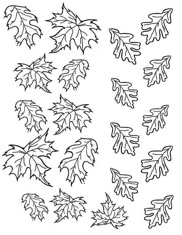 Picture of Maple Autumn Leaf Coloring Page