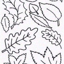 Type of Autumn Leaf Coloring Page