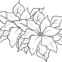 Nice Poinsettia Decoration for National Poinsettia Day Coloring Page