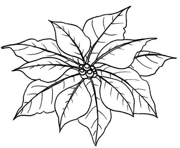 Poinsettia Leaves for National Poinsettia Day Coloring Page