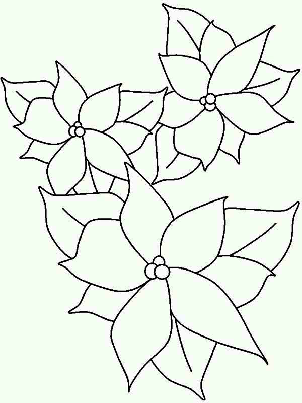 Poinsettia Lineart for National Poinsettia Day Coloring Page