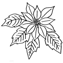 Poinsettia in Bloom for National Poinsettia Day Coloring Page