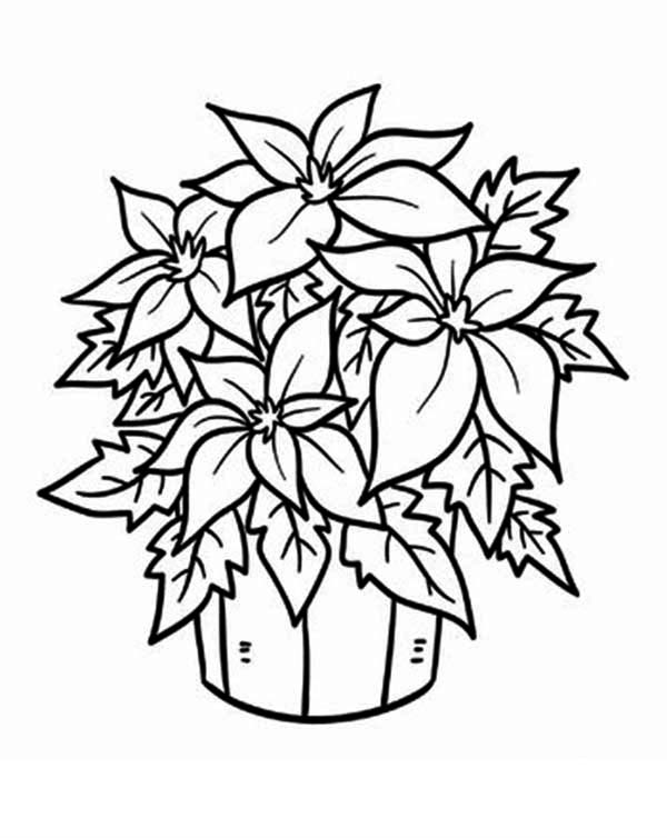 Poinsettia in a Bucket for National Poinsettia Day Coloring Page