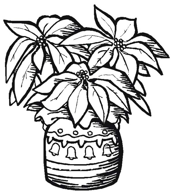 Poinsettia In A Nice Pottery For National Poinsettia Day Coloring