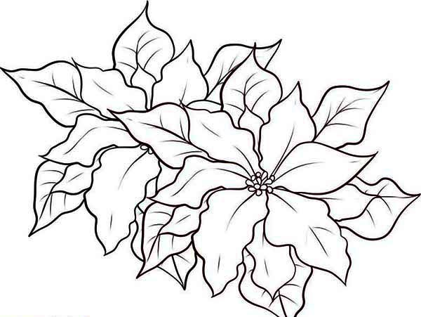 Poinsettia in the Backyard for National Poinsettia Day Coloring Page