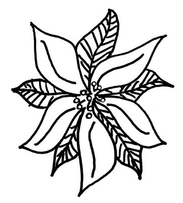 Free Christmas Holiday Simple Poinsettia Coloring Page - Make Breaks | 662x600
