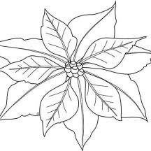 Simple Poinsettia Drawing for National Poinsettia Day Coloring Page