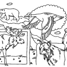 Canadian Indigenous Animals on Memorable Canada Day Coloring Pages