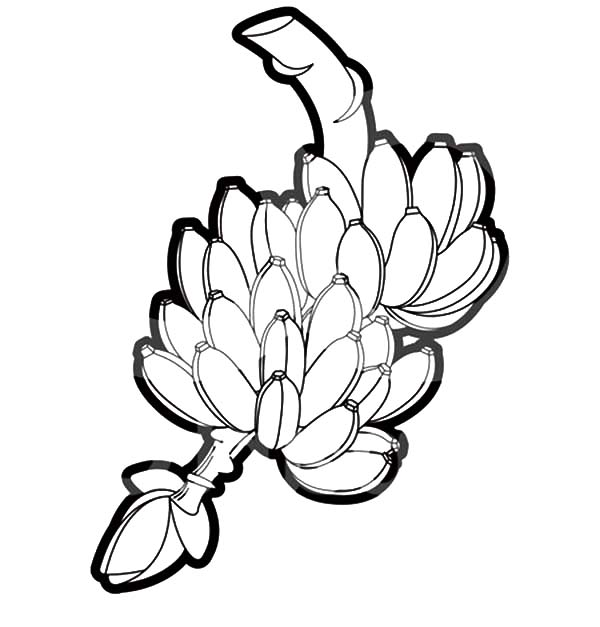 A Fresh Banana Bunch Coloring Pages