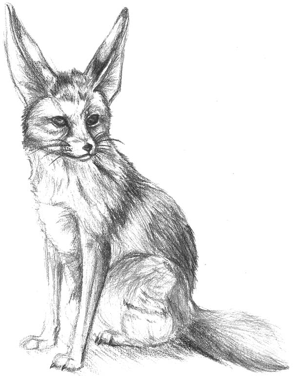 Alpha Male Desert Fox Coloring Pages