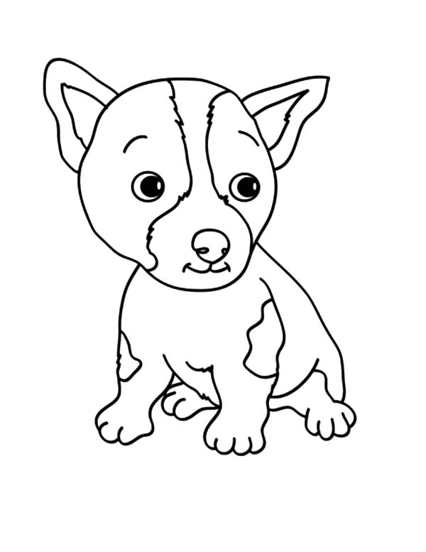 Baby Chihuahua Dog Coloring Pages