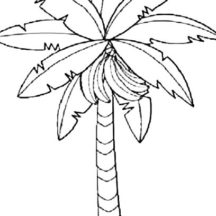 Banana Bunch on Banana Tree Coloring Pages