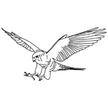 Chick Hunter Falcon Bird Coloring Pages