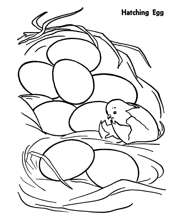 Chicken Hatching from Egg Coloring Pages