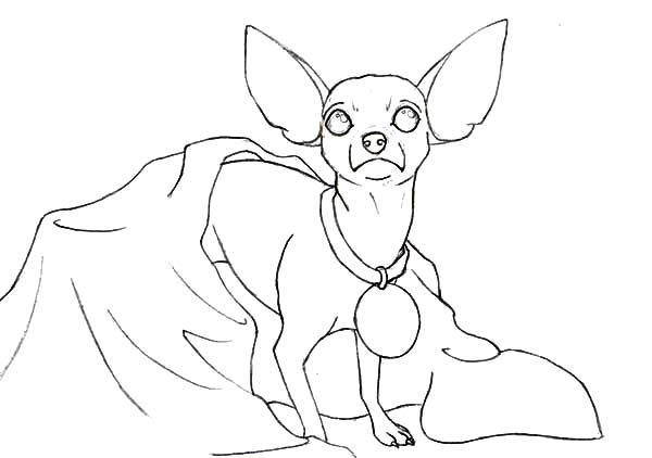 Chihuahua Dog Coloring Pages for Kids