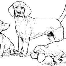 Chihuahua Dog Family Coloring Pages