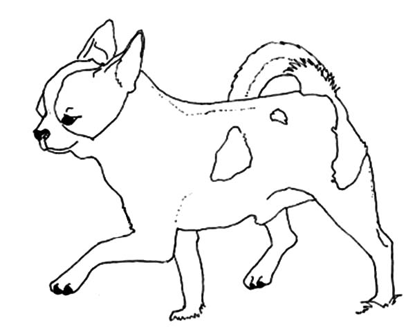 Chihuahua Dog Taking a Step Forward Coloring Pages