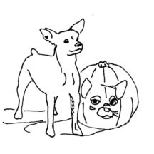 Chihuahua Dog and Pumpkins Coloring Pages