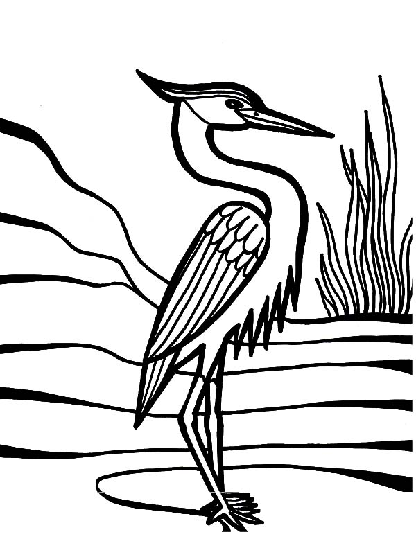 - Crane Bird Beautiful Feather Coloring Pages - NetArt