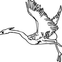 Crane Bird Begin to Fly Coloring Pages