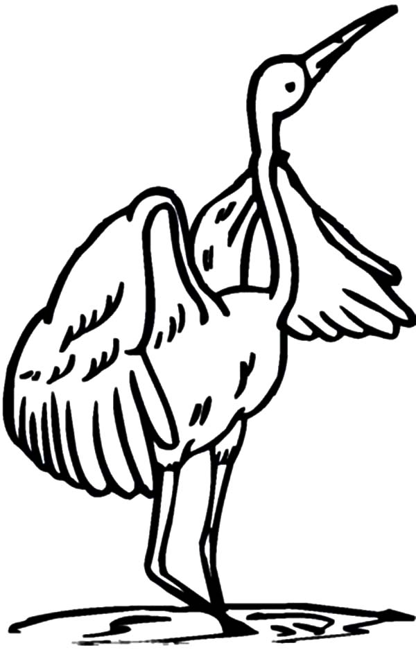 Crane Bird Coloring Pages for Kids