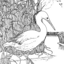 Crane Bird Hiding from Predator Coloring Pages