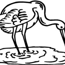 Crane Bird Hunting for Fish Coloring Pages