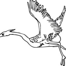 Crane Bird Migration Coloring Pages