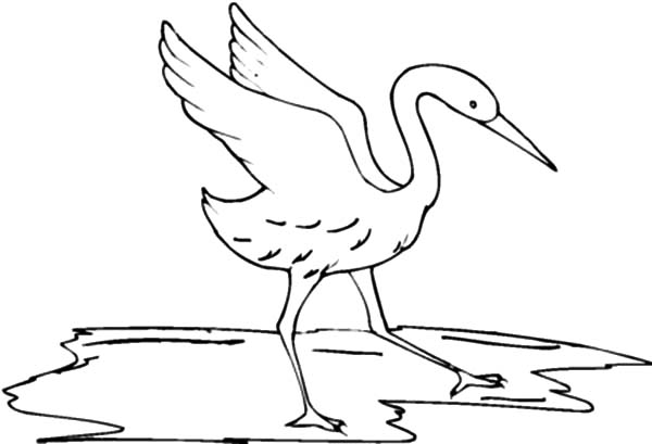 Crane Bird Painting Coloring Pages