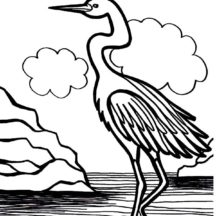 Crane Bird is Swamp Bird Coloring Pages