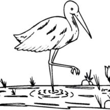 Crane Bird on Paddy Field Coloring Pages