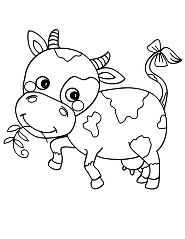 cow coloring pages free printable - cute cow coloring pictures coloring pages