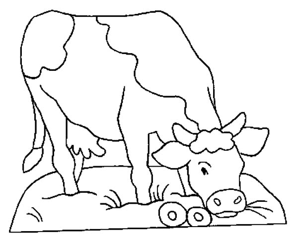 Dairy Cow Eat Donut Coloring Pages