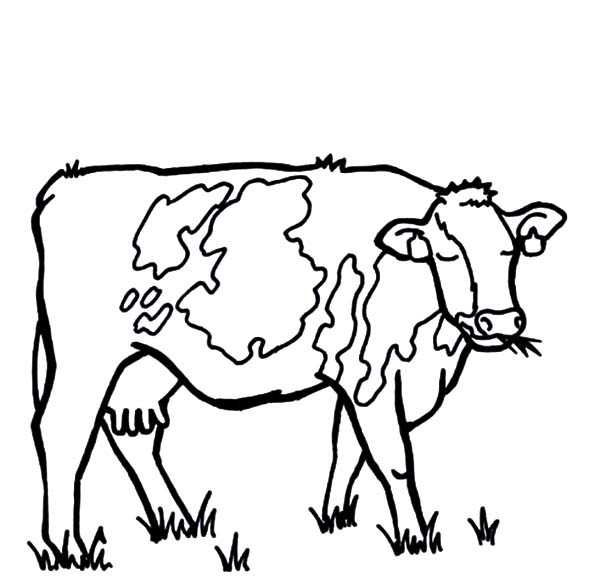 Dairy Cow Eat While Sleeping Coloring Pages